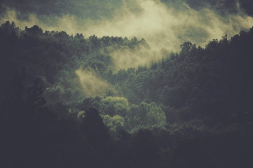 forest-918548_1920