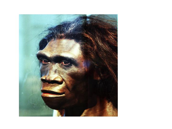 Homo nopeus dating Uusi-Seelanti